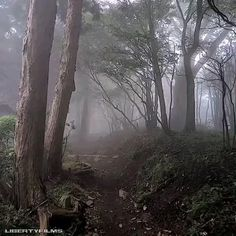 Dark Green Aesthetic, Nature Aesthetic, Dark Paradise, Forest Fairy, Dark Forest, Twilight, Aesthetic Pictures, Mother Nature, Scenery