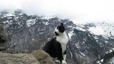 cat guides man down a mountain (2) (1)
