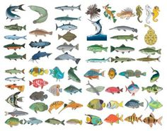 a variety of fish vector