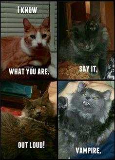 Twilight funny