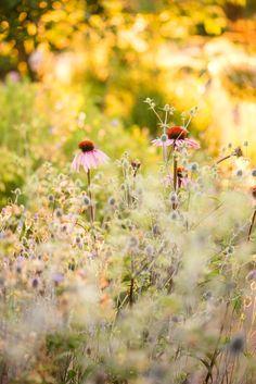 HERNEPENSASKUJANTEEN TAKANA SIINTÄÄ POTAGER Landscape, Garden, Flowers, Garten, Landscape Paintings, Gardens, Lawn And Garden, Tuin