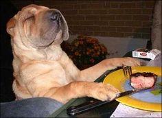 Dogs dinner (2)