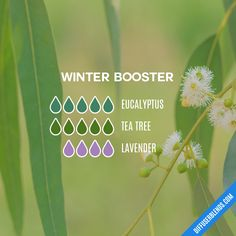 The ultimate essential oil blend software! Easily find what blends you can make based on the oils you have. Essential Oils Christmas, Fall Essential Oils, Essential Oils Online, Essential Oil Diffuser Blends, Essential Oil Uses, Best Smelling Essential Oils, Essential Oil Combinations, Hygiene, Diffuser Recipes