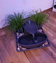 DIY Katzenbrunnen Katzen brauchen Gras zum Fressen!!!