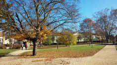 Sárvár várpark ősszel Sidewalk, Plants, Sidewalks, Plant, Pavement, Walkways, Planting, Planets