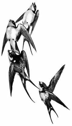 Swallow in flight Golondrinas Tattoo, Sparrow Tattoo, Atelier D Art, Desenho Tattoo, Watercolor Bird, Bird Art, Vintage Images, Vintage Birds, Birds In Flight