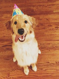 Molly turned one and go to wear this Lisa Frank hat from my 7th birthday, immediately after this picture she destroyed it. - Imgur