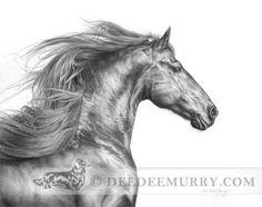 Friesian stallion, pencil drawing by DeeDee Murry