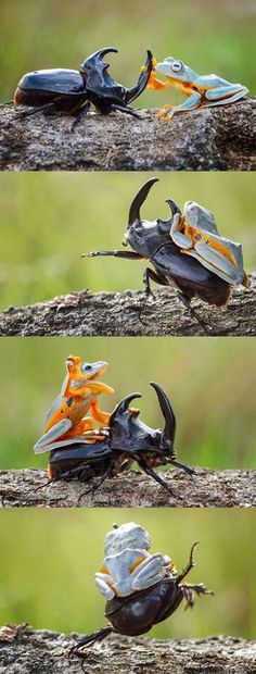 Nature is amazing.....heeee haaaa 🐎😎 Funny Lizards, At Dawn We Ride, Awkward Animals, Funny Animals, Tame Animals, Animals And Pets, Snake Funny, Frogs, Narnia