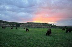 South Unit - Theodore Roosevelt National Park - Reviews of South Unit - TripAdvisor