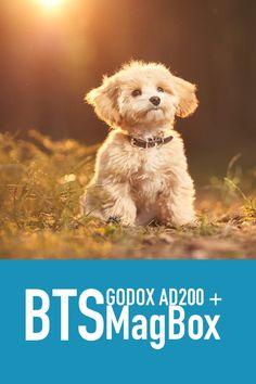 Se hvordan jeg jobber med blits utendørs når jeg fotograferer hunder.   Min første Live stream hvor jeg viser hvordan jeg jobber med lys for å ta bedre bilder av hund ute. Presentasjon av Godox AD200 og Magmod sitt blits tilbehør. Blandt annet MagBox.  #lær å bruke blits #blits #blitz Streamers, Behind The Scenes, Studio, Teddy Bear, Fine Art, Dogs, Animals, Animales, Animaux