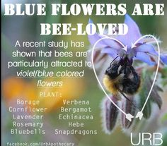Pollinator Plants — Bees are particularly attracted to violet/blue flowers Raising Bees, I Love Bees, All Nature, Bee Happy, Save The Bees, Busy Bee, Bees Knees, Bee Keeping, Blue Flowers