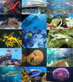 Barcelona Aquarium: A unique experience