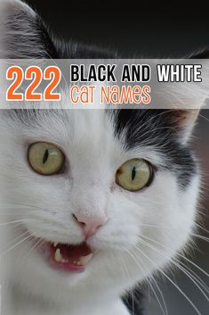 Have You Just Adopted A Fluffy Ball Of Cute And You Re Trying To Figure Out A Name Here Are 222 Names For Bla Boy Cat Names Black Boy Cat Names Girl