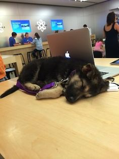 i would be at the apple store all the time if this happened on a regular basis.