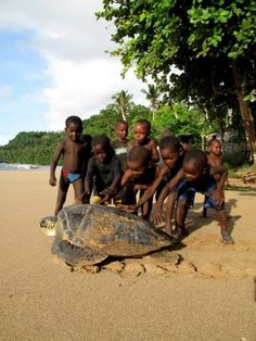 sao tome children playing with giant sea turtle