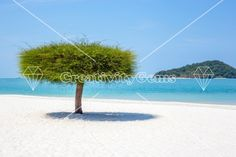 Single tree on a beach in Malaysia shaped like a cylinder with an ocean an island background