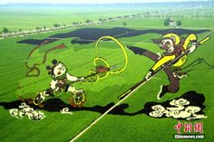 Awe-inspiring 3D agricultural art achieved by planting different rice varieties based on the color of their leaves. (Shenyang, Liaoning Province)