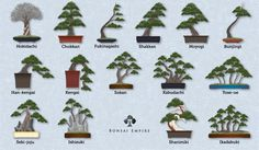 Bonsai styles, shapes and forms explained - Bonsai Empire