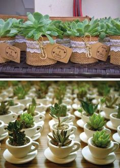 Succulent Souvenirs Plants 49 Ideas For 2019 Succulent Wedding Favors, Succulent Gifts, Wedding Favours, Cacti And Succulents, Planting Succulents, Deco Champetre, Flower Pots, Flowers, Cactus Y Suculentas