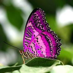 Resultado de imagen de fotos mariposas