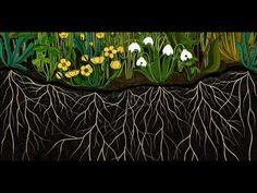 пышная бессловесная ботаническая анимация. Обсуждение на LiveInternet - Российский Сервис Онлайн-Дневников