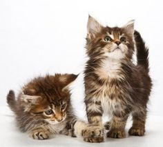 10 Tips to Keep Your Cat's Brain Young   Pets - Yahoo! Shine