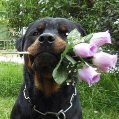 I'm the new Bachelor!! Will you accept this rose?