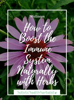 How to Boost the Immune System Naturally - Holistic Health Herbalist