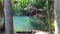 Berry Springs Nature Park, terletak diluar kota Darwin tepat nya di Berry Springs, sekitar 50 km dari Darwin. Namun, bisa menjadi destinasi pilihan untuk Traveler yang kurang menyukai atau bosan dengan suasana pantai. Tertarik untuk ke Berry Springs Nature Park? Jangan lewatkan kesempatan untuk mendapatkan 2 #tiketpesawat ke Darwin GRATIS dari promo annyversary #NusaTrip. Kunjungi halaman  http://goo.gl/ZBGmyG untuk info nya *Syarat dan ketentuan berlaku Photo: Weekendnotes website