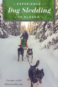 Experience Alaska's number one sport - dog mushing. Don't just ride along, learn how to mush your own team of dogs in Fairbanks! via @Ottsworld