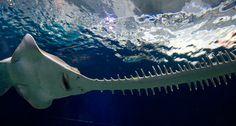 Shedd Aquarium - Chicago | About Shedd