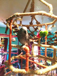 #homemade #pvc #hanging #birdgym :) Parrot Stand, Bird Aviary, Play Gym, Play Areas, Shelter, Room Ideas, Tropical, Birds, Homemade