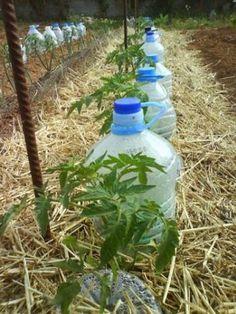 Économisez de l'Eau cet Été avec l'Irrigation Solaire au Goutte à Goutte.