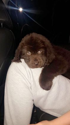 my friends newfoundland puppy Brown Newfoundland Dog, Newfoundland Puppies, Cute Dogs And Puppies, Big Dogs, I Love Dogs, Doggies, Animals Beautiful, Cute Animals, Labrador Retriever Dog