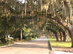 Live Oak Trees, Jekyll Island, GA