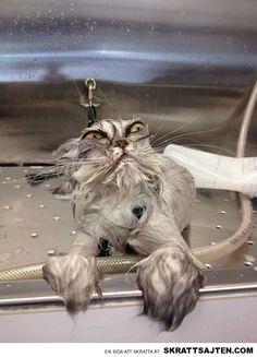 En samling arga katter (15 bilder)