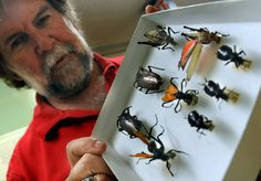 Carl Olson, associate curator at the University of Arizona Insect Research Collection, holds an assortment of insects you may encounter this monsoon season