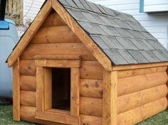 Oso needs a plus sized log cabin dog house.