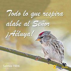 ¡Alaba a Dios! ¡Que alaben a Dios todos los seres vivos! (Salmos 150:6) http://hopemedia.es