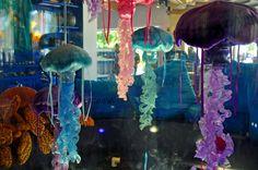 Jellyfish: Laura Bray