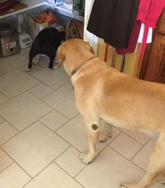 Busted Nelly in the pantry and it appears that Bubba is on the lookout! Haha