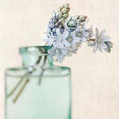 Blumen Fotografie Stilleben Kunst Blume von RockyTopPrintShop, $15.00