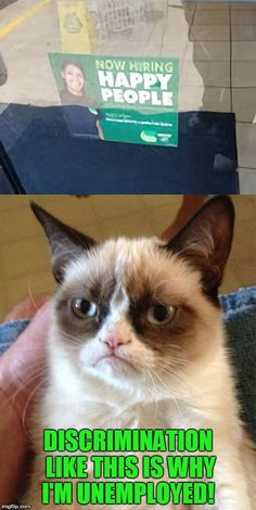 Grumpy Cat Looks For A Job! | DISCRIMINATION LIKE THIS IS WHY I'M UNEMPLOYED! | image tagged in memes,grumpy cat,happy people,funny memes,unemployed,hiring | made w/ Imgflip meme maker