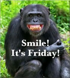 Monkey Smile Its Friday QUote friday friday quotes its friday smile its friday friday images friday pics friday sayings friday image quotes Happy Friday Quotes, Friday Meme, Monday Quotes, Friday Sayings, Friday Pics, Friday Images, Cute Quotes, Funny Quotes, Funny Memes