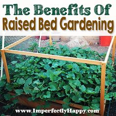 Raised Garden Bed Benefits  | by ImperfectlyHappy.com