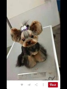 Zoebirdee is getting this hair style for the summer....