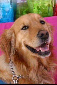Maggie Comfort Dog  (Facebook via LCC K-9 Comfort Dogs)