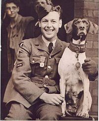 Okay, last animal soldier I'm going to post, but this dog's story is kind of nuts.