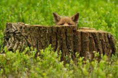 Estas fotos harán que teenamores delos zorros